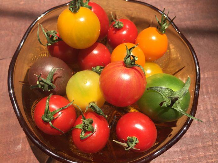 石原農園のミニトマト